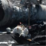 MH-17-Abschuss (2): Keine geordnete Untersuchung mehr geplant?